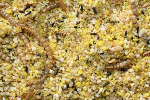 Krachtvoer met meelwormen