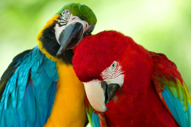 Parkietenvoer & papegaaienvoer