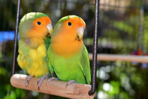 Voer voor binnen-vogels