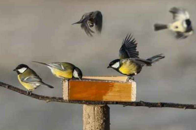 Voermixen tuinvogels