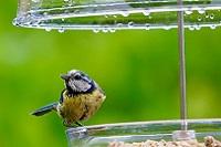 Wat over je vogels in de herst?